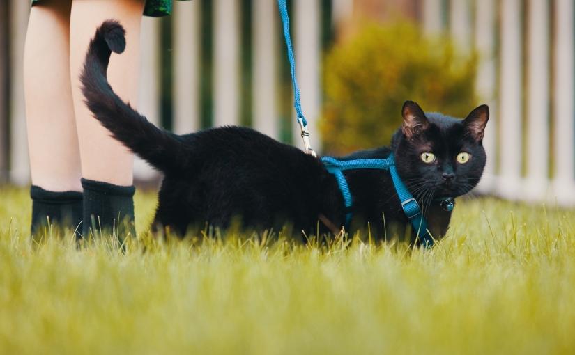 Pet Management inWeybridge