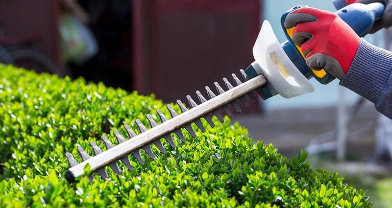 Shrub pruning set for August 31