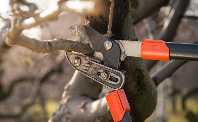 Winter pruning services available fromBrightView